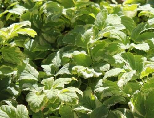 Sank vilde urter i naturen